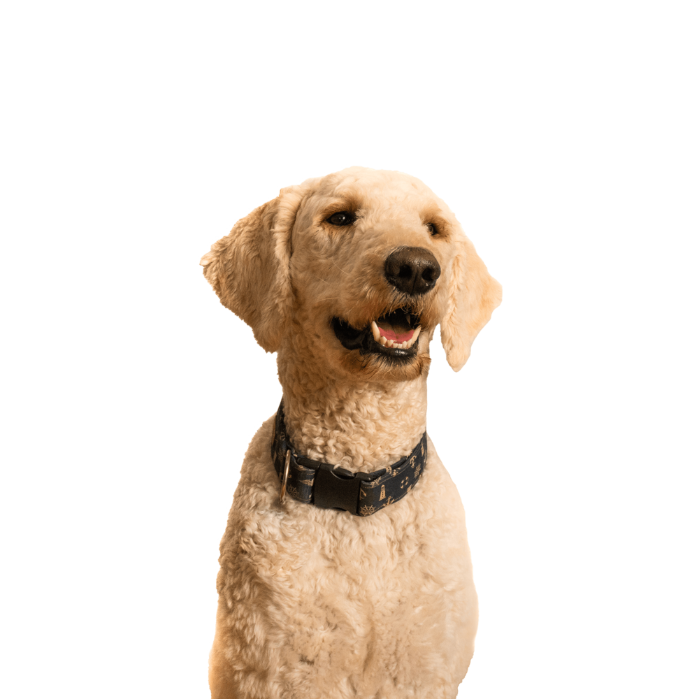 Murphy, Office Mascot