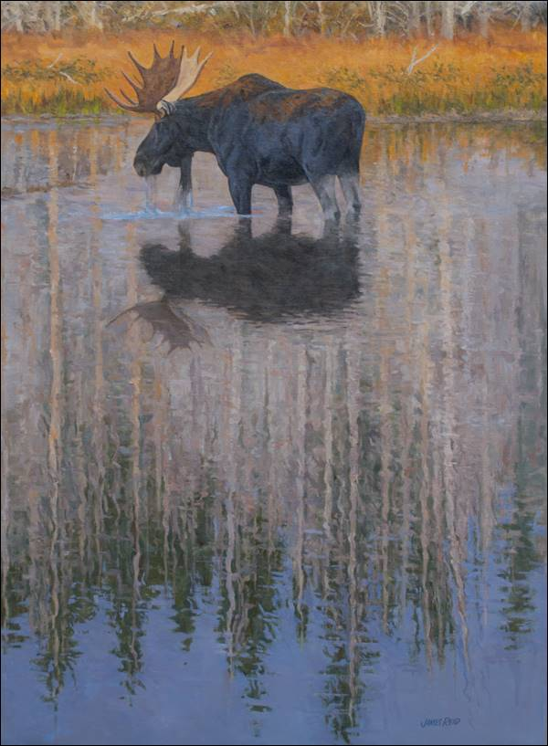 """Moose Still Water Reflection""- 20x30 - oil on linen"