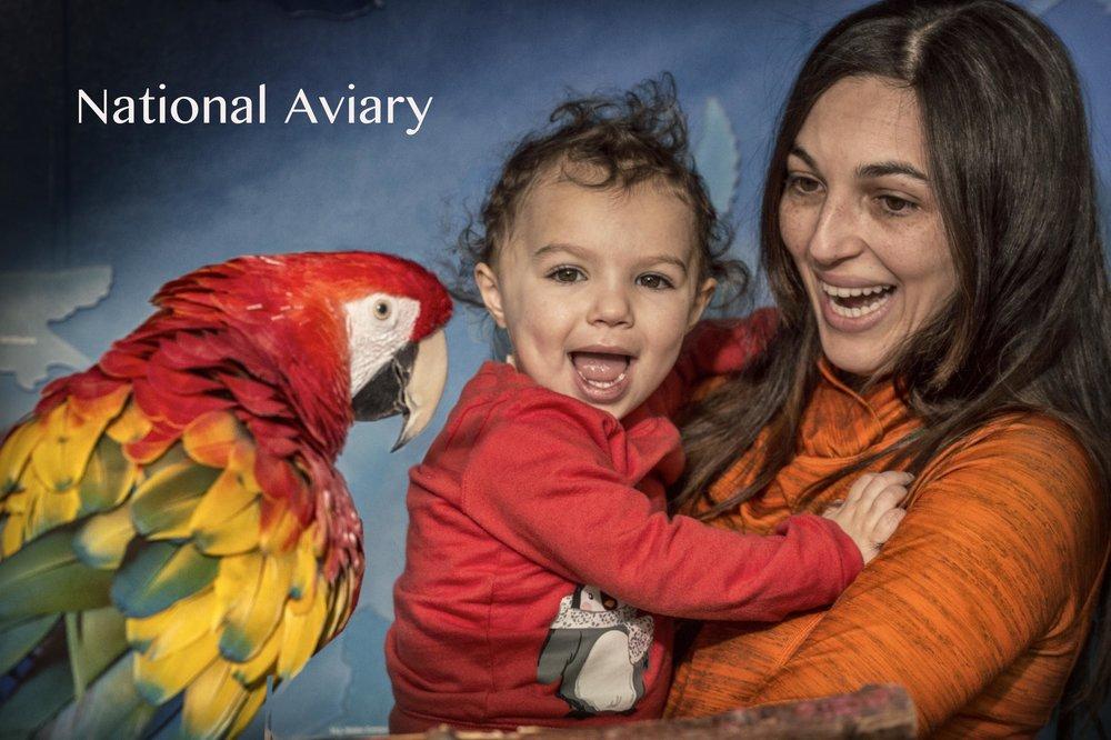 Aviary_2.jpg