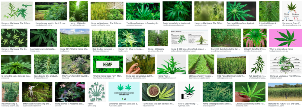 "Screenshot from a Google Image search for ""hemp"""