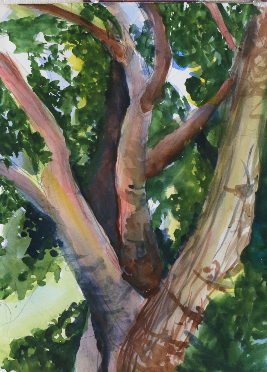 big old tree     watercolor         2016         beth vendryes williams