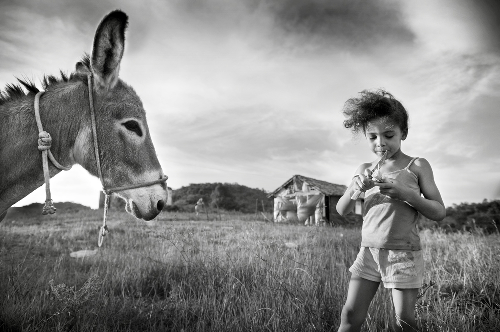 Donkey and child