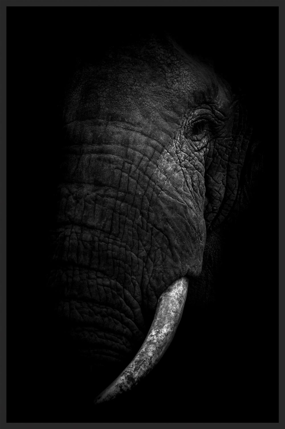 ELEPHANT'S EXTINCTION