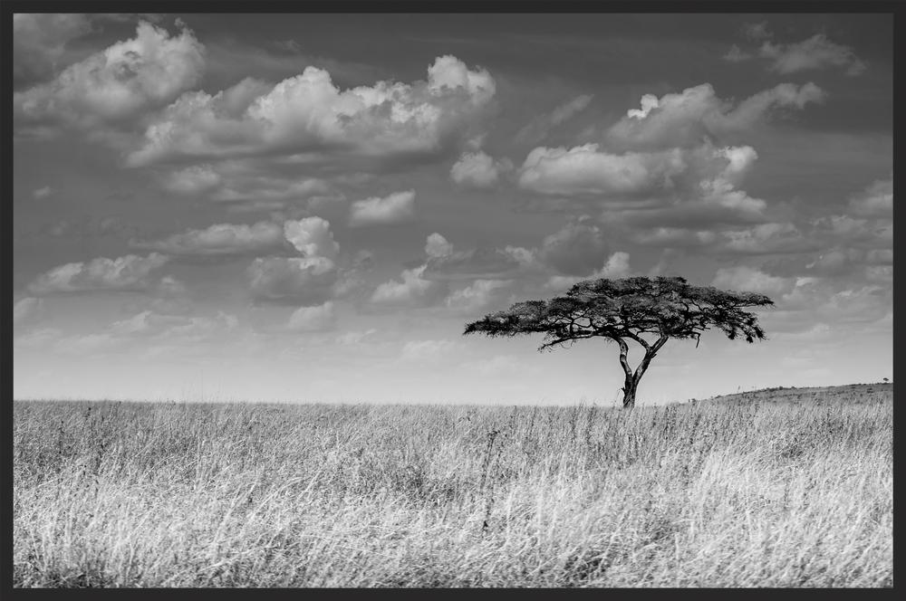 ONE SERENGETI SAVANNAH TREE