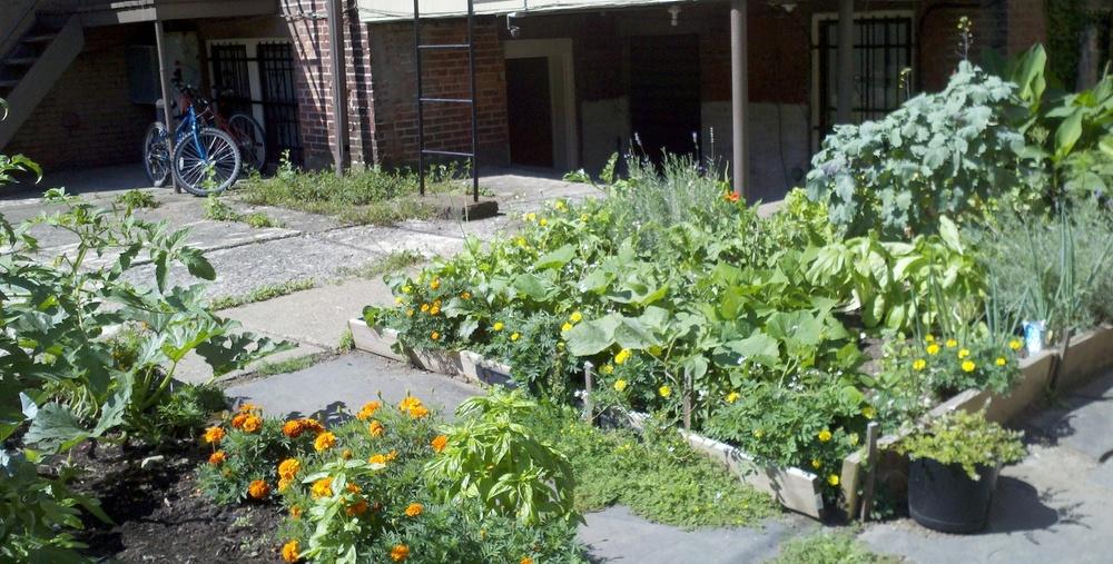 9-12 Garden Veggies.jpg