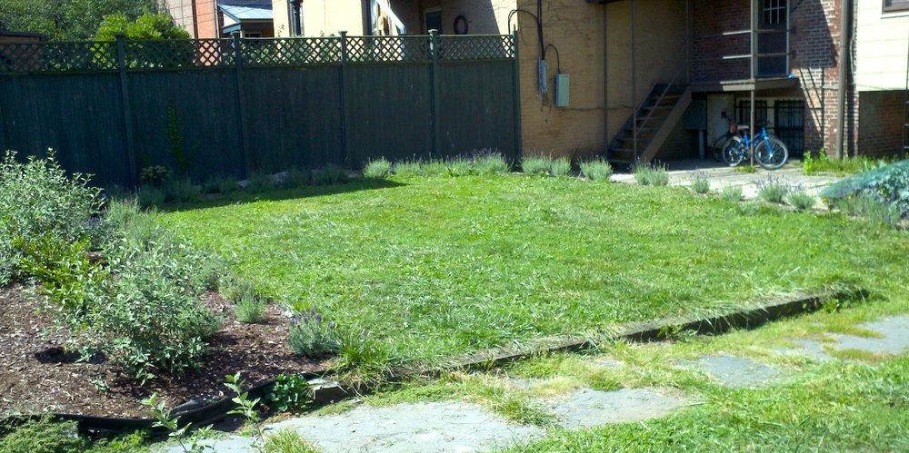 9-12 Garden Lavender.jpg