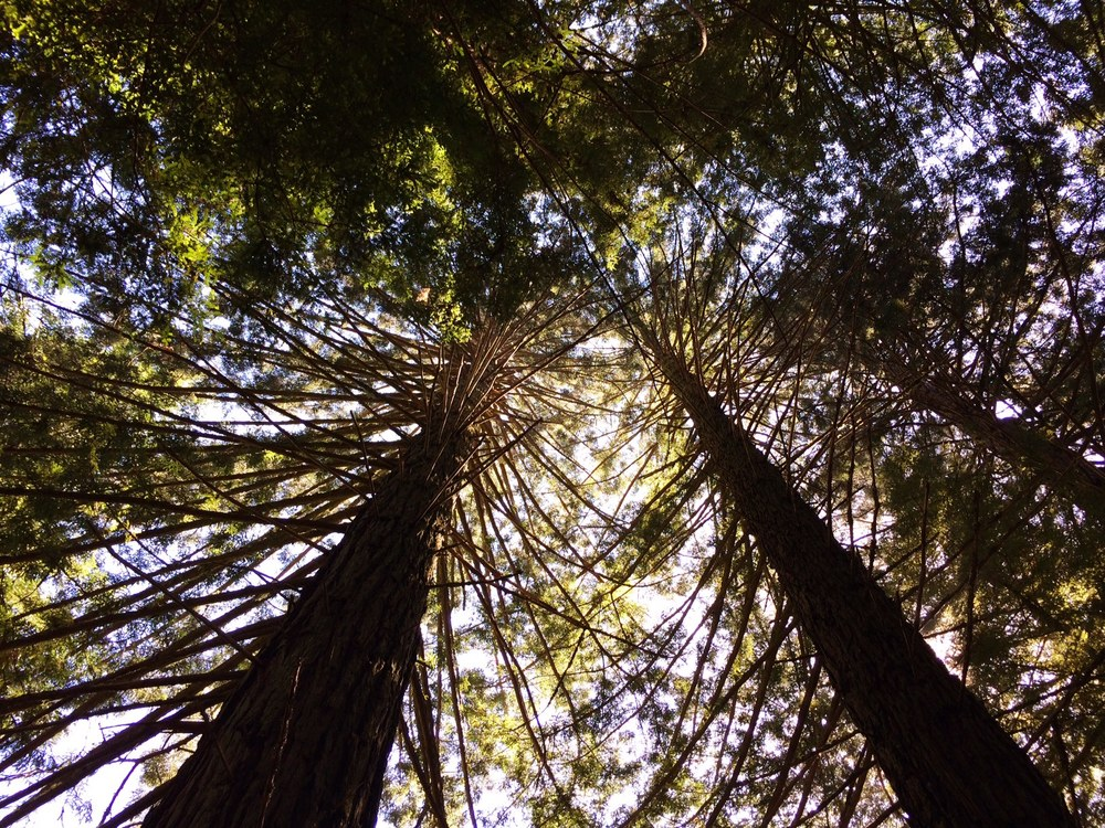 At rock bottom - look up. Your redemption is calling.  This picture was taken while hiking at the Purisima Creek Redwoods Nature Reserve, California.