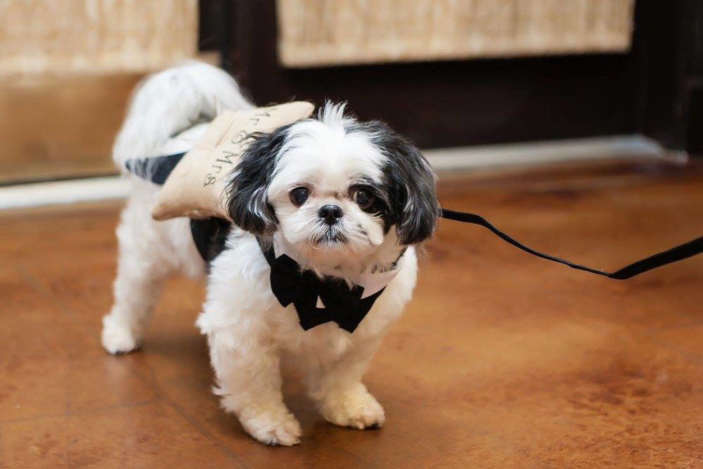 Teddy Ring Bearer.jpg