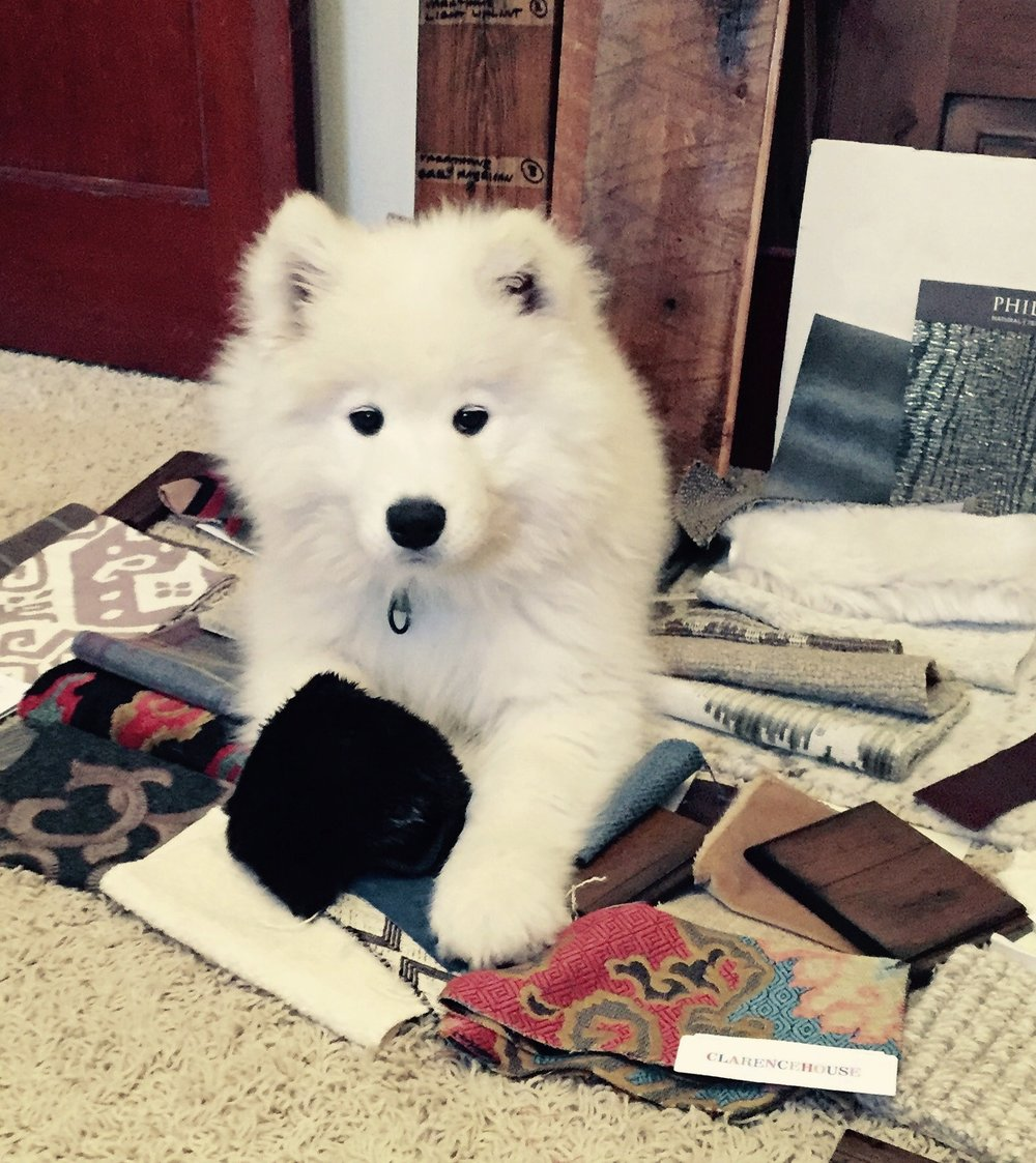 Baby Bo helping with fabric selection on our Yellowstone Vista Project