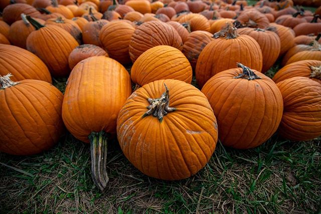 Pumpkin spice latté: 🎃 Pumpkin pie: 🎃🎃 Pumpkin patch: 🎃🎃🎃 . . . . . #pumpkin #pumpkinpatch #october #naturephoto #instanaturelover #natureaddict #landscape #autumn #fall #fallcolors #candidfm