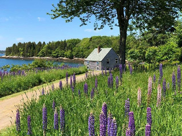 Monday's aren't too bad when you have views like this! As you walk down to the dock to go kayaking, swimming, or crabbing, make sure you stop and smell the wild Lupines! #floodscove