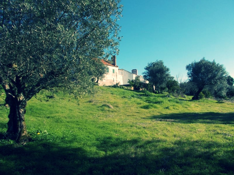 Off Site retreats at our Brain Spa in Portugal - We offer highly curated unique executive retreats and off sites at our beautiful olive farm in Portugal.