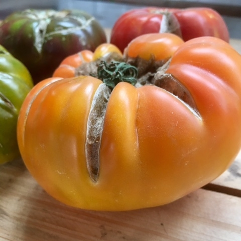 Margold - This lovely, sunny tomato is a member of a French Heirloom variety series. Marigolds have a peachiness to them; think super sweet flavor and juice dripping down your chin.