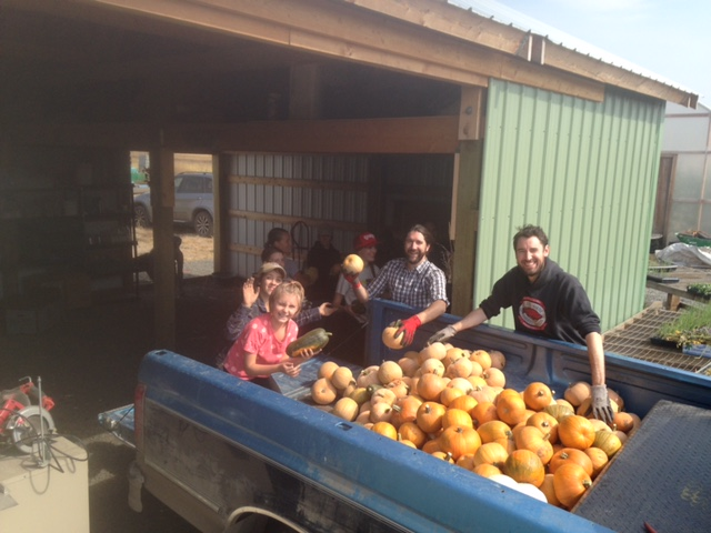 Friends bucket-lining pie pumpkins into the pack shed for storage.