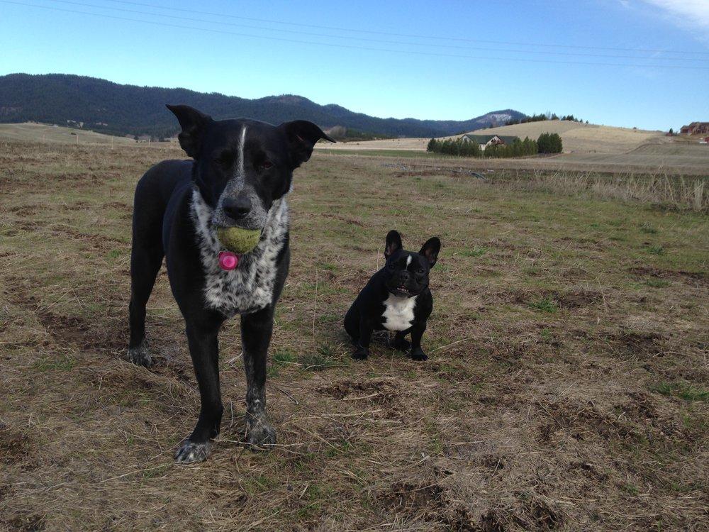 Tali and Midge like to walk the fields too!