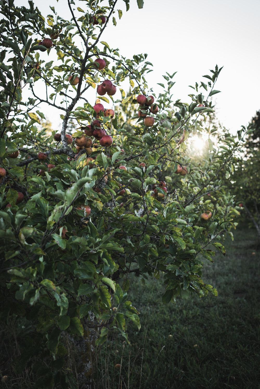 Fall Pies -23.jpg