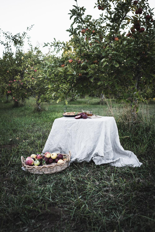Fall Pies -28.jpg