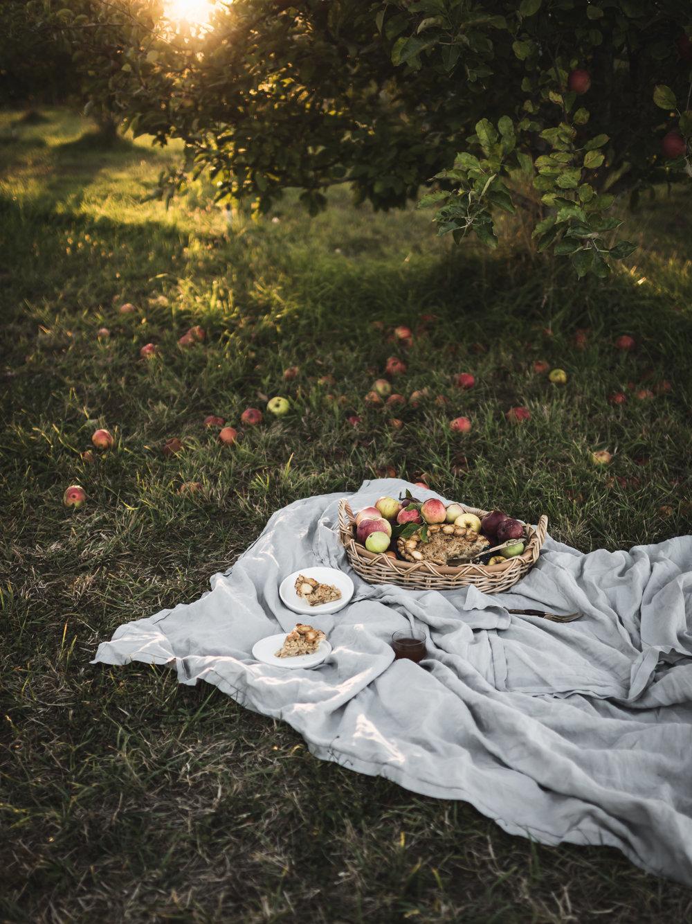 Fall Pies -45.jpg