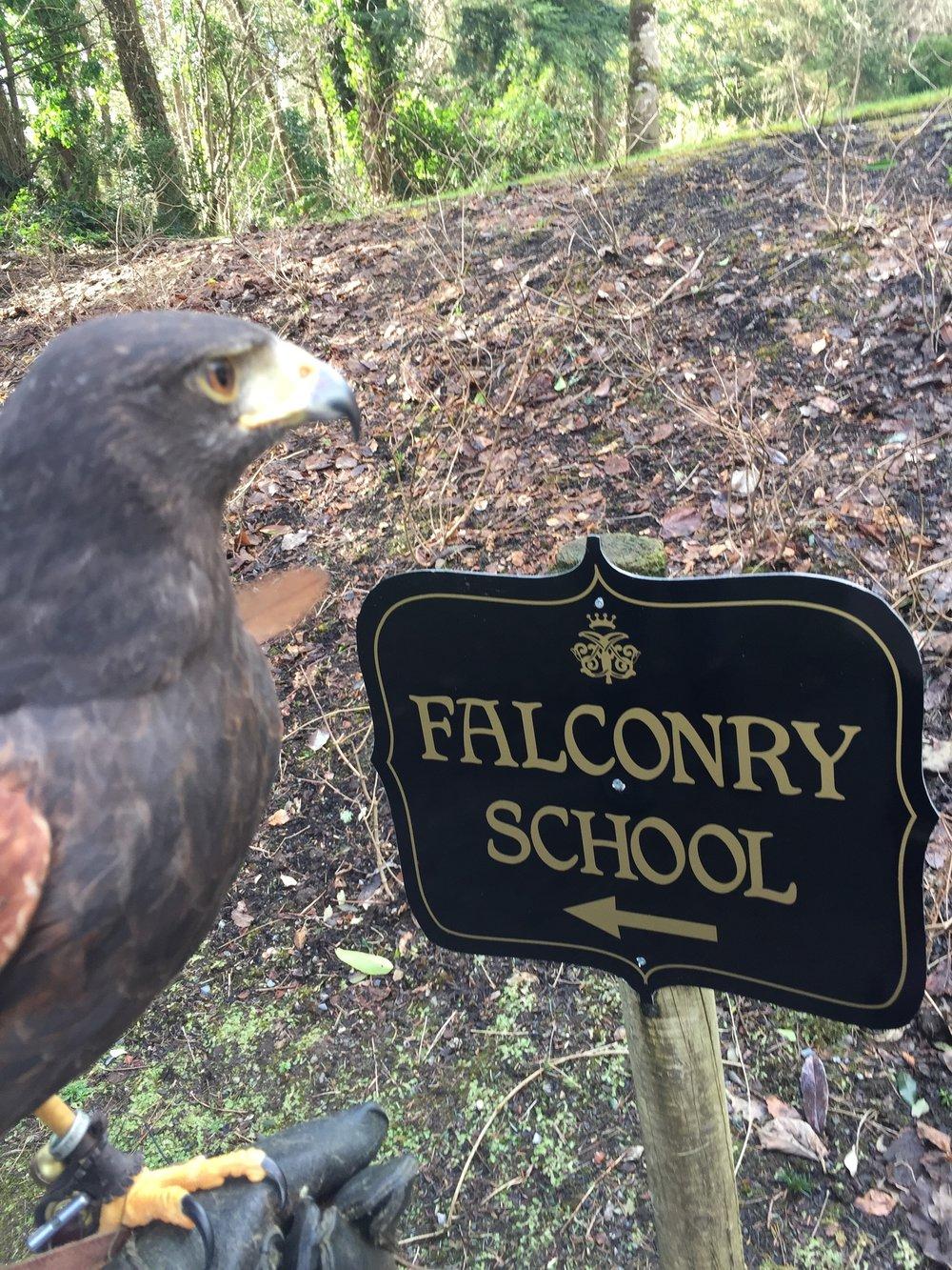Ashford Castle Falconry School.jpeg