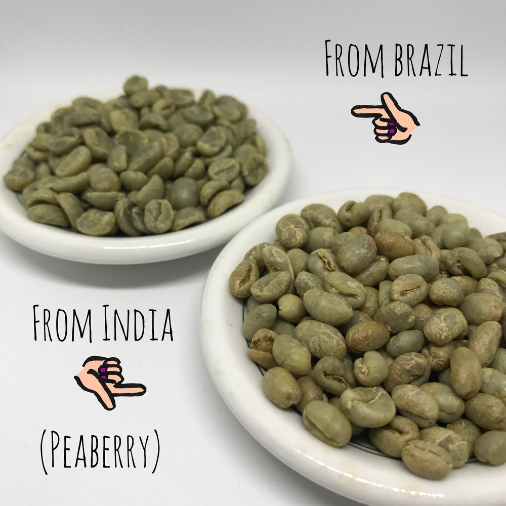 These beans from Brazil are denser than the beans from India. However, once roasted, the Brazil beans will be much bigger than the Indian beans.