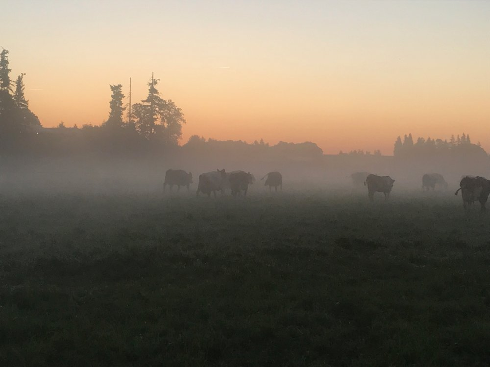 Perrin Family Farm at dawn.