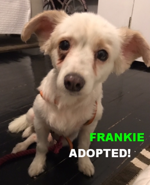 Fostered in New York