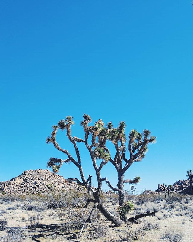 Clarity. @cactusmountain @joshuatreegeodome @thebuckminsterhouse