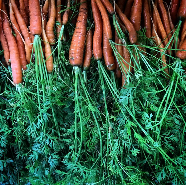root bottom farm carrots