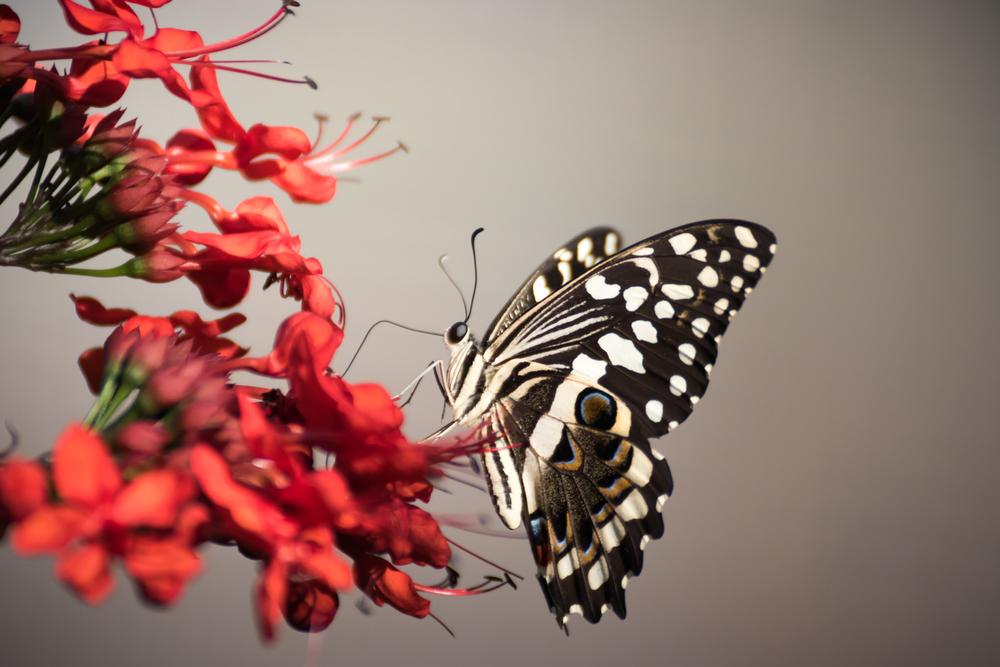 butterfly-14.jpg
