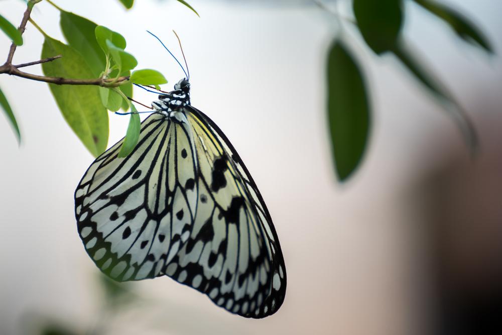 butterfly-15.jpg