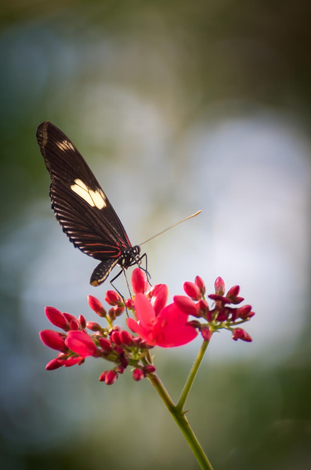 butterfly-16.jpg