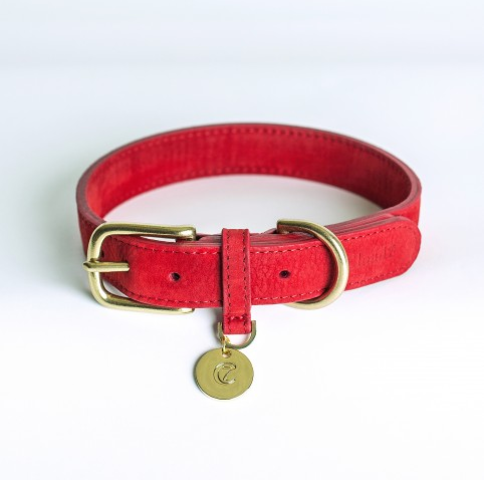 Favorite DOG COLLARS: TOP FIVE — SHOP DOG SHOP CAT BI22