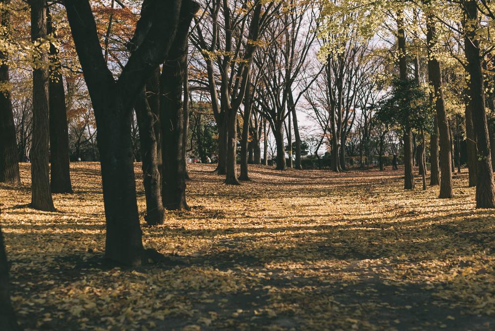 Yono park in winter