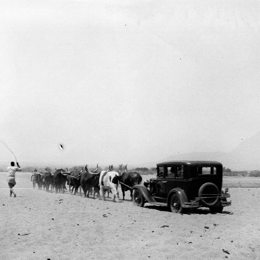 Justine's Grandmother and Grandfather being pulled across the Save River bed by their cattle during the dry season. Taken in the early 1930's.