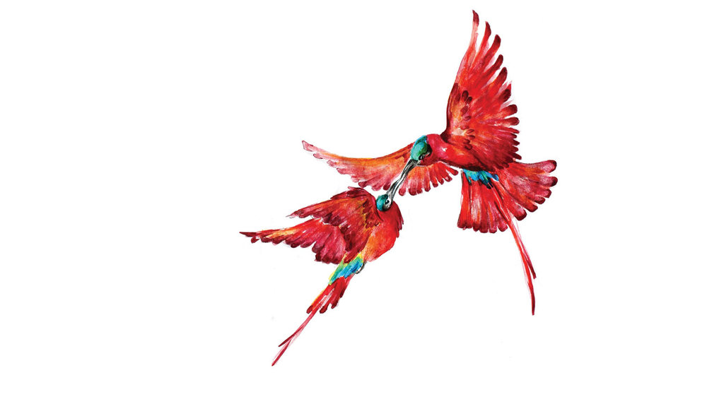 Carmine Bee-Eater's painted by Justine to personalise her stationary