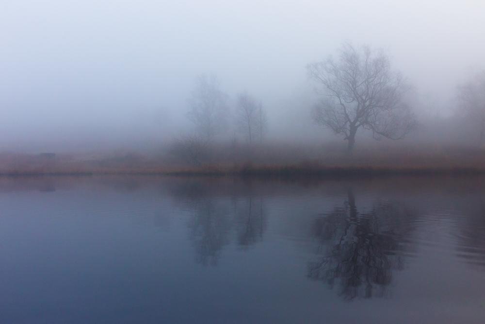 Longhsaw Mist