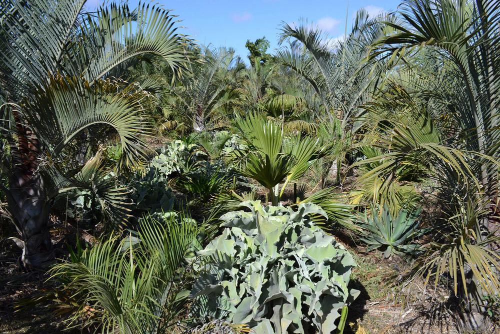 141020_Moroccan Nursery Visit_Blog_5.jpg