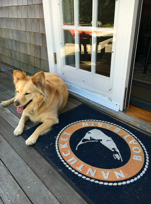 Luckiest Nantucket Rescue Dog