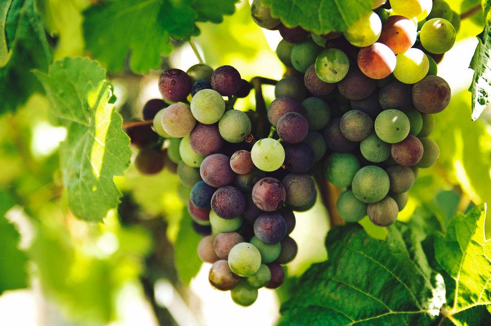 Grape High Res.jpg