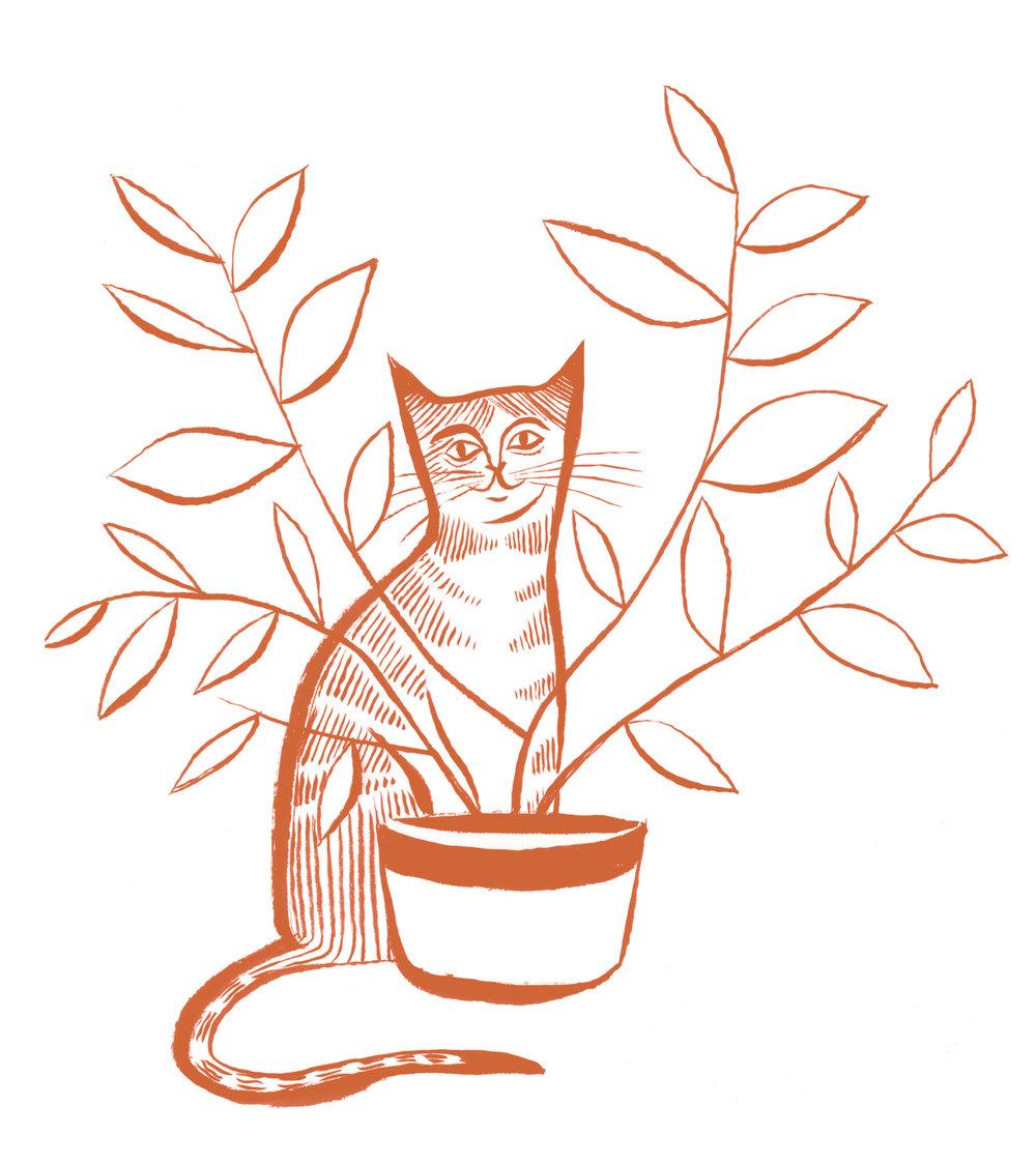 ocam_plant_cat_spot.jpg