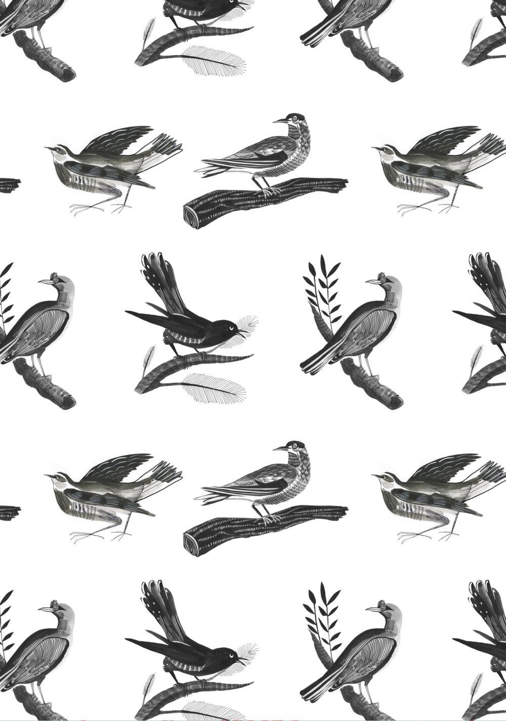 Winter Birds , 2015