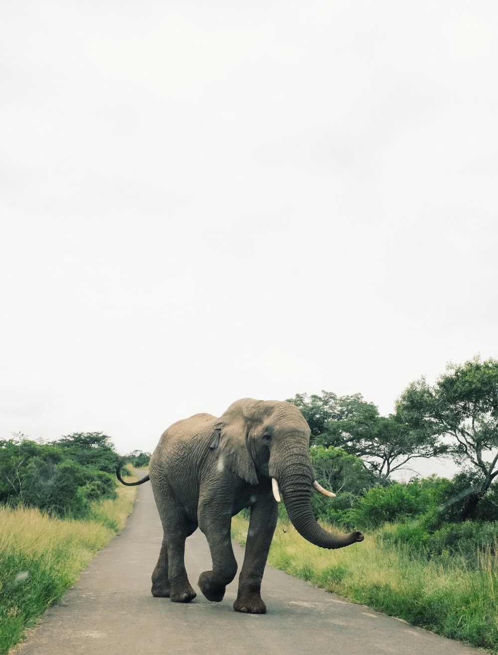 We were so fortunate to be surrounded by elephants on our game drive through  Hluhluwe game reserve .