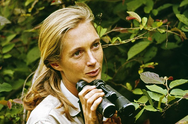 Got a girl crush on: Jane Goodall Who doesn't love a fresh-faced primate lover? (via nevver:Unchanging Window)