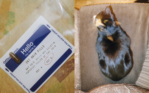 "Photo: A real-life Cat Hair Pill and ""Cat B"""