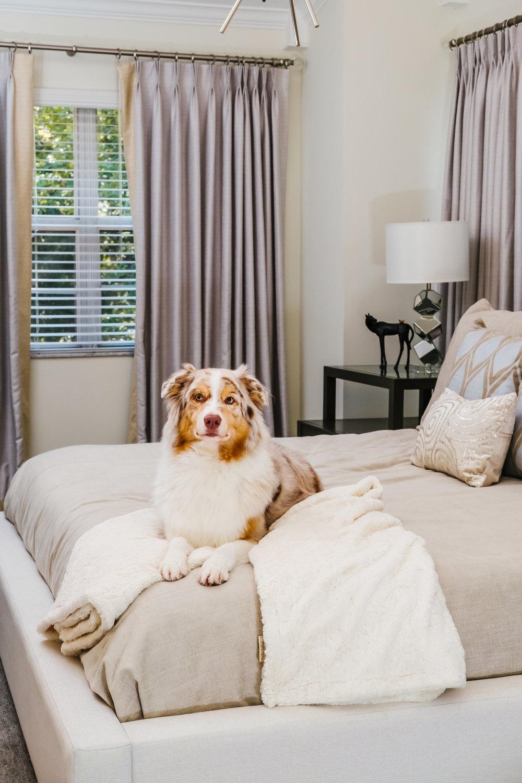 Ann Cox Design_ Interior Design_Modern South Tampa Home-34