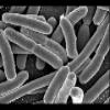 1905 - Germ Theory