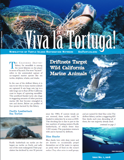 Viva La Tortuga  is the print newsletter of Turtle Island Restoration Network. It is sent out to some 80,000 households. I wrote and edited this publication.  Click here to download a PDF.   View more newsletters by clicking here.