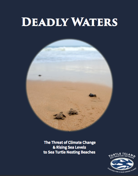 Deadly Waters: The Threat of Climate Change & Rising Sea Levels to Sea Turtle Nesting Beache  s  is a publication of Turtle Island Restoration Network. I designed and edited the report.  Click here to download the report.