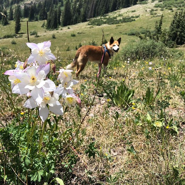 Baker among the wildflowers.