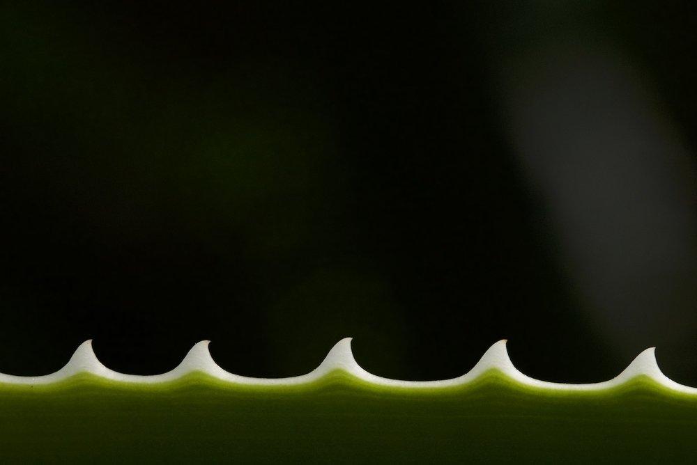 rose 3 (1).jpg
